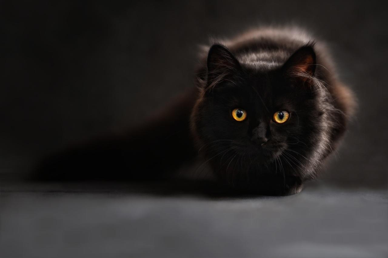 """""""黑猫白猫,抓住耗子就是好猫""""的企业该反思了"""